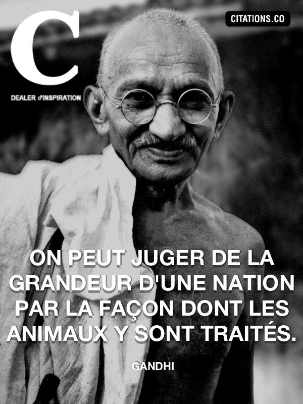 Citation de Gandhi